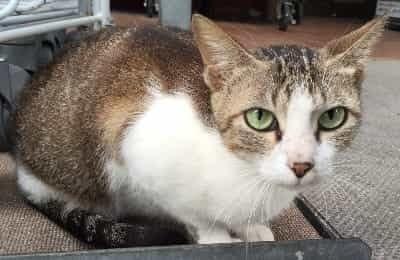 20160207-cat